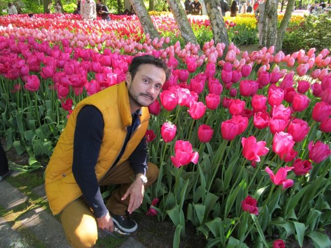 Holanda, entre tulipanes y molinos de viento